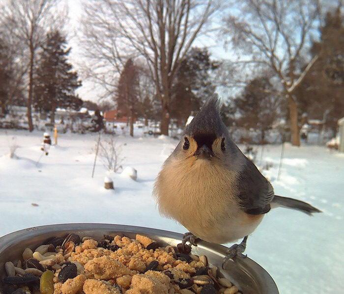 Фотографии птичек у кормушки: задумка Lisa M.