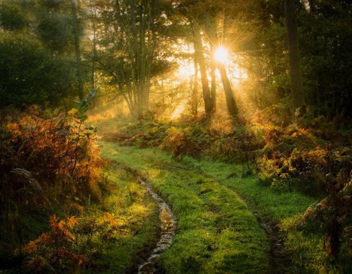 Фотографии, наполненные естественным светом