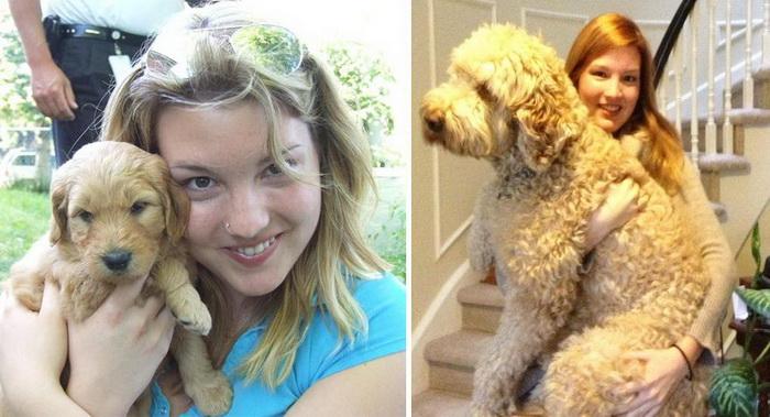 20 щенков, которые выросли