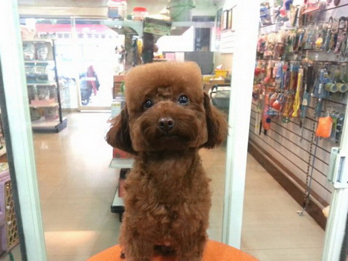 Новые модные стрижки собак