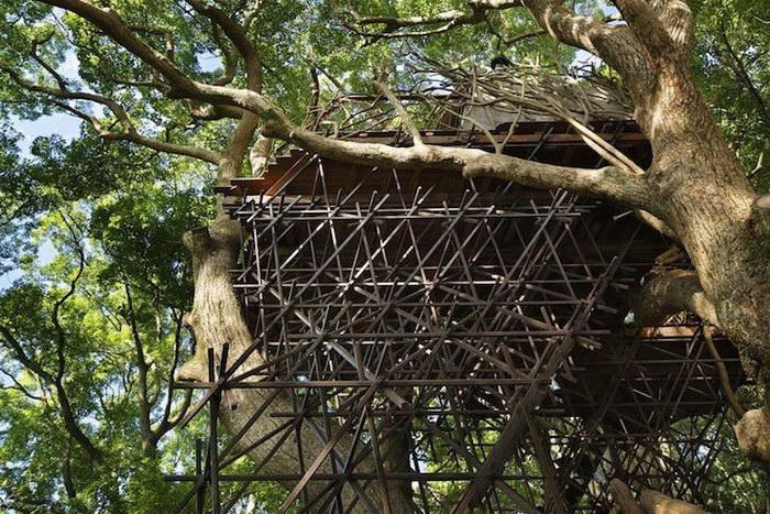 Дом на дереве в Японии