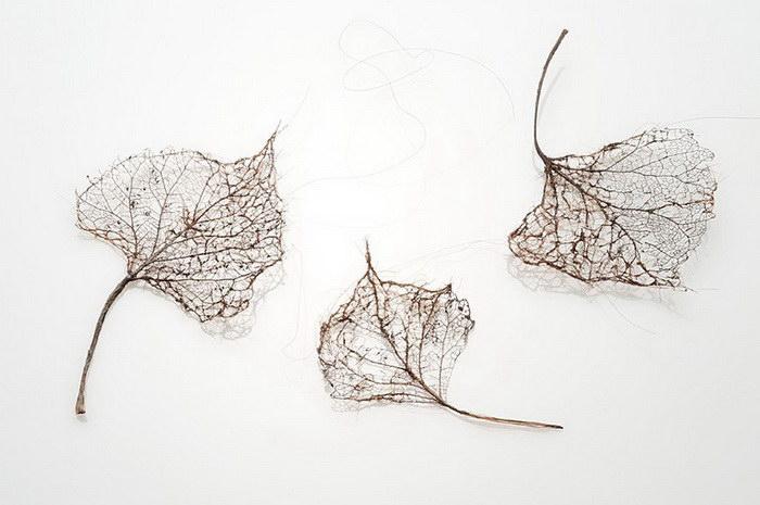 Скульптуры листьев из человеческих волос