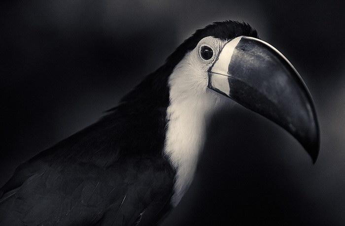 Птицы в фотографиях Antti Viitala