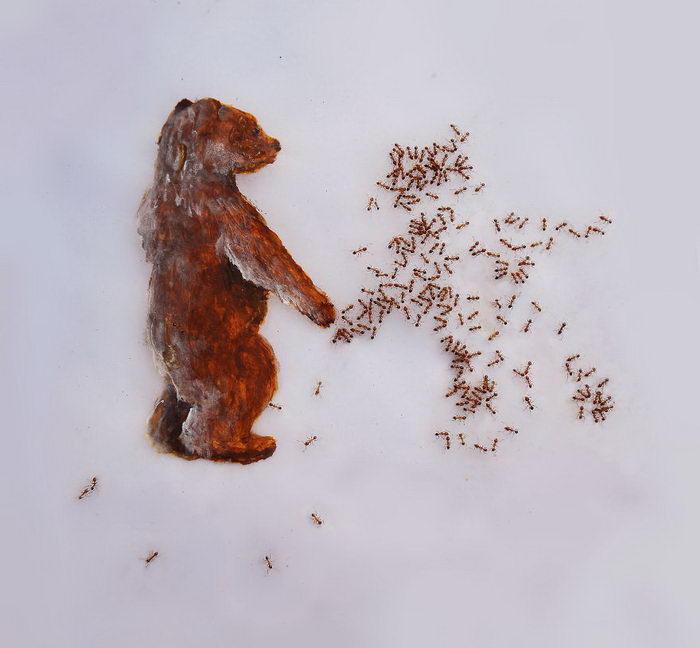 Совместное творчество с муравьями Iantha Naicker