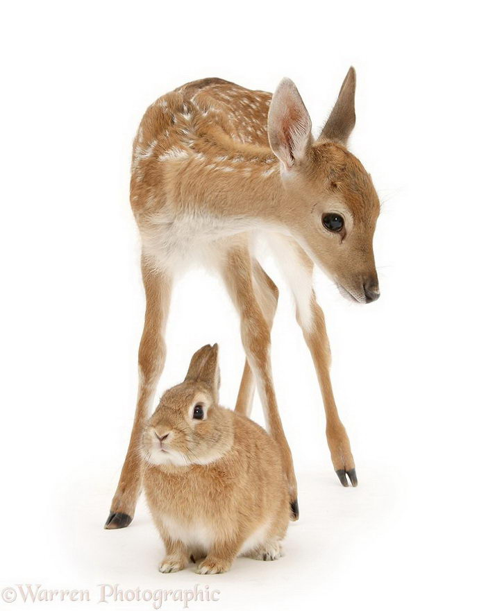 Разные звери с одинаковой окраской: проект Warren Photographic