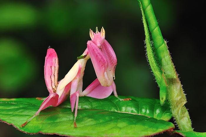 Животные необычных цветов