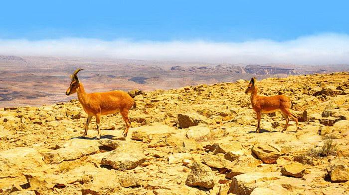 Прекрасные фото животных, сделанные на простые камеры смартфонов