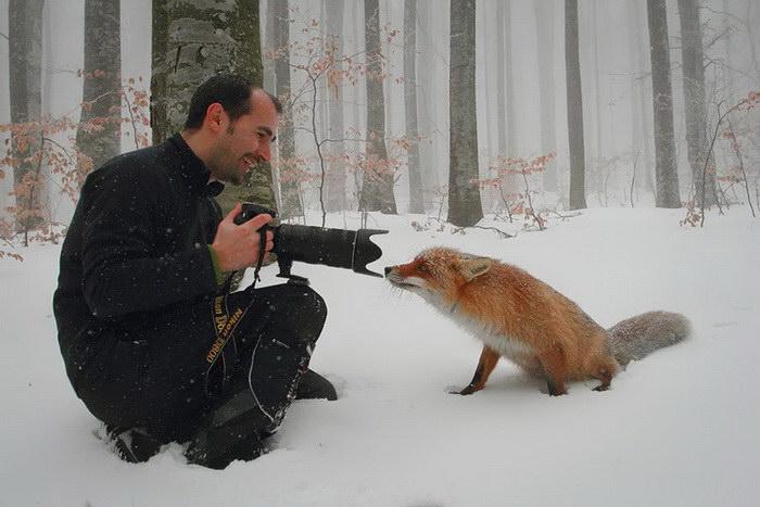 20 причин работать фотографом-анималистом