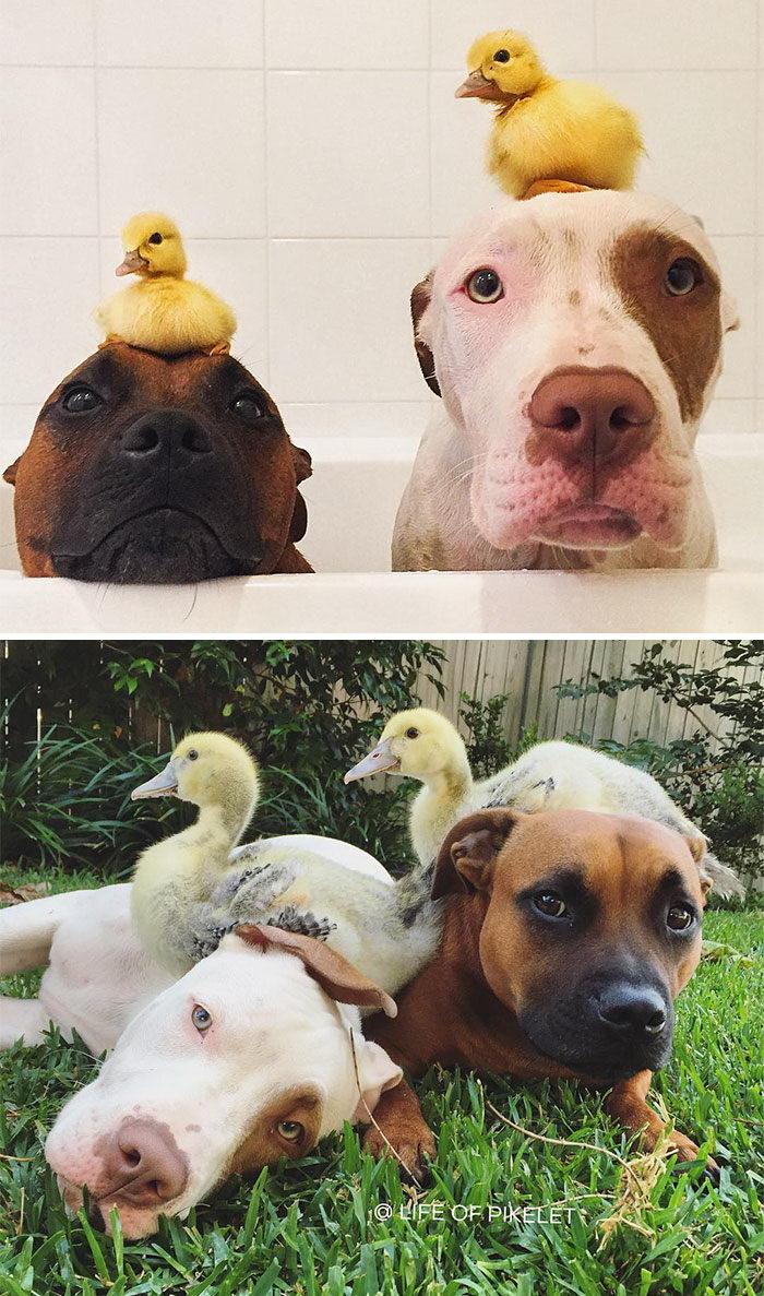 Животные, растущие вместе: до и после