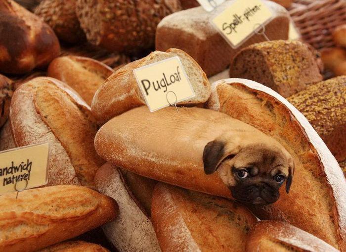 Десерты с элементами собачек: Dogs In Food