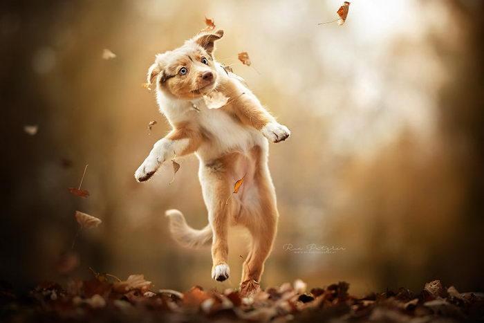 Удивительные фотографии собак Ria Putzker