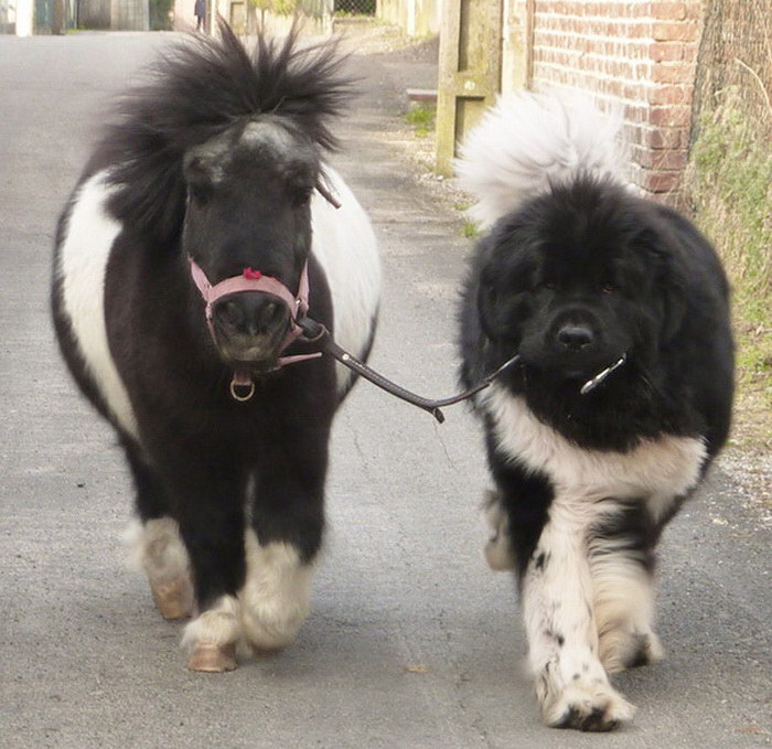 15 маленьких лошадок, которые вас обязательно очаруют