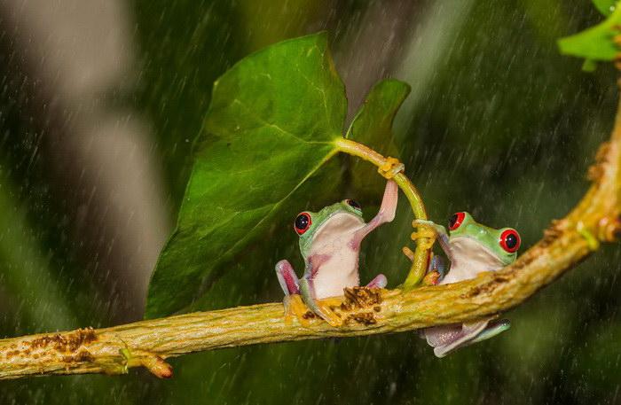 Животные и их природные зонтики