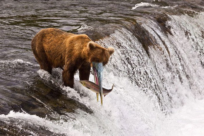 Bears with beaks