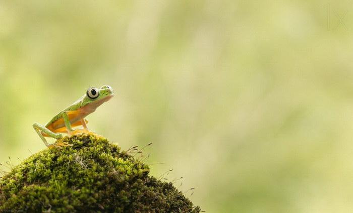 Яркие тропические лягушки и их поведение
