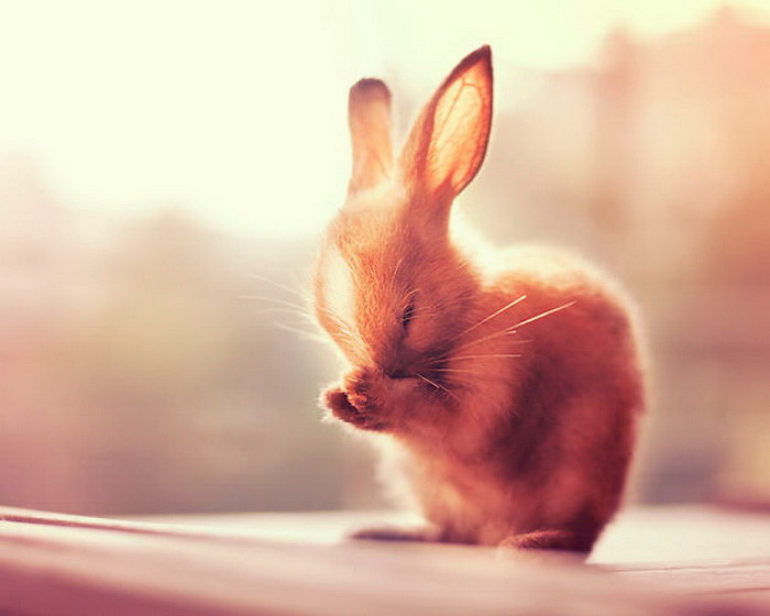 20 очаровательных кроликов, которые сделают ваш день прекрасным