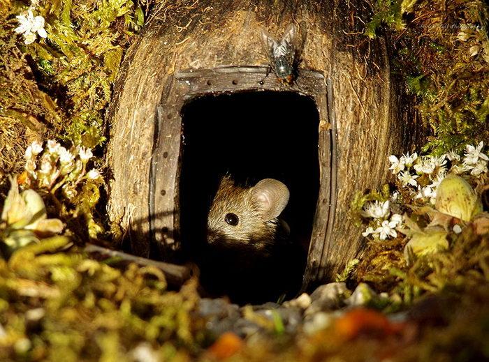 Мышки в домике: фотопроект Simon Dell