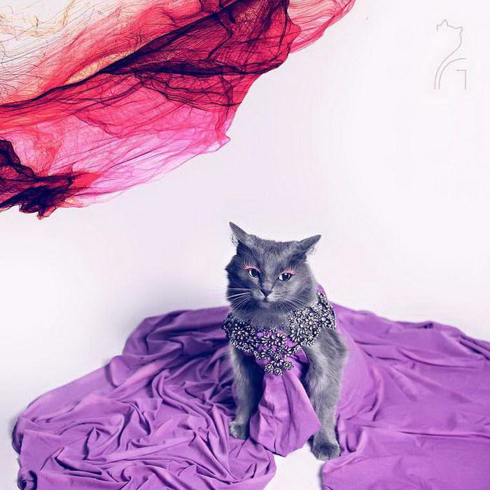 Самая гламурная и модная кошка в мире