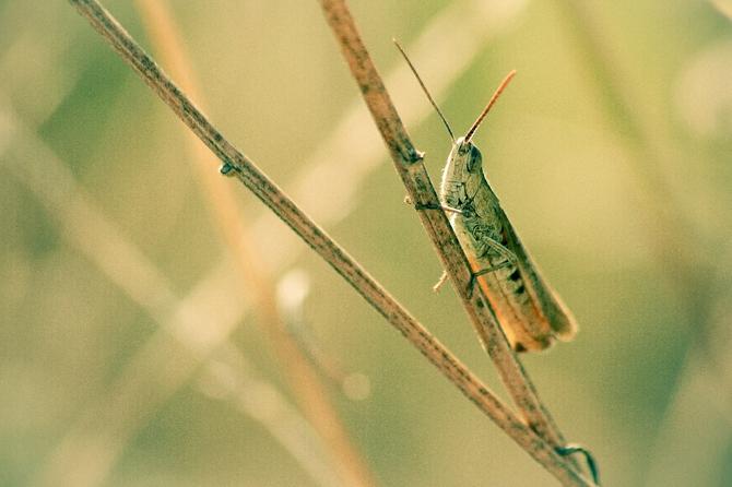 Портреты богомолов, кузнечиков, бабочек и других насекомых