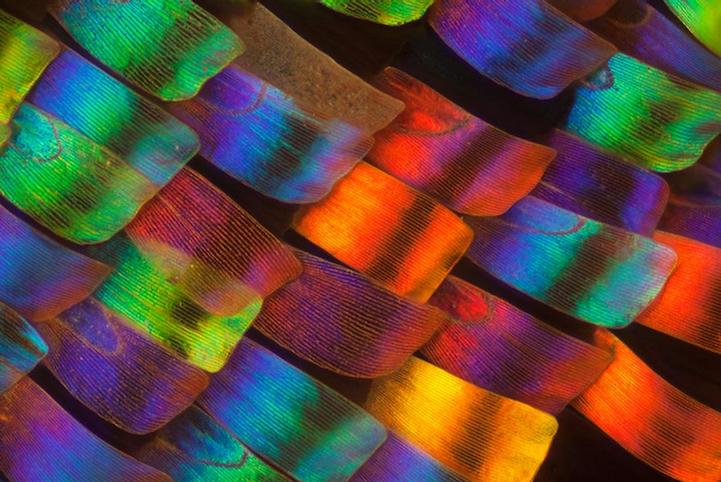 Крылышки насекомых в фотографиях Linden Gledhill