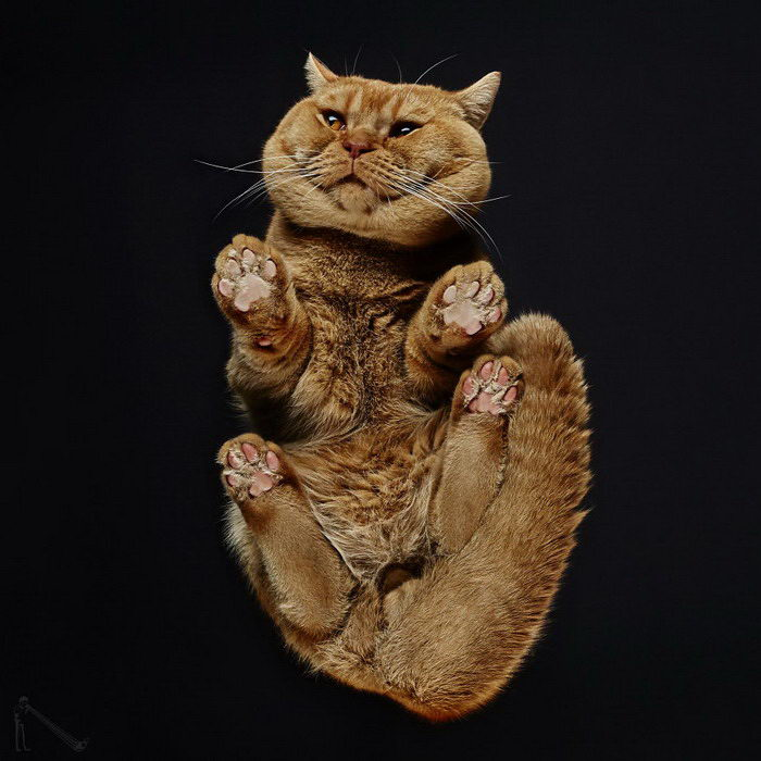 Фотографии кошек снизу Andrius Burba