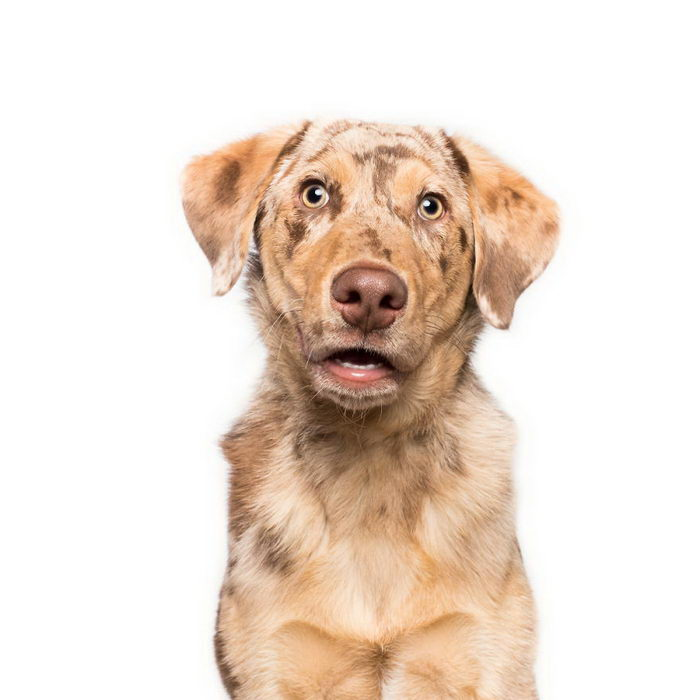 Такие разные характеры собак: фотопроект Elke Vogelsang