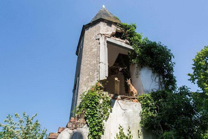 Заброшенные места, захваченные природой: фото Jonk