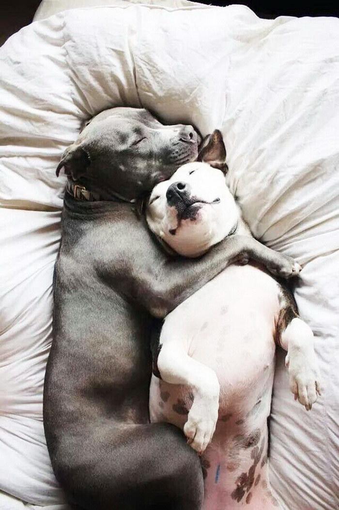 25 собак вместе со своими лучшими друзьями