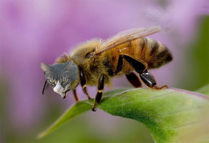 Пчелки с кошачьими мордами: творчество во время карантина