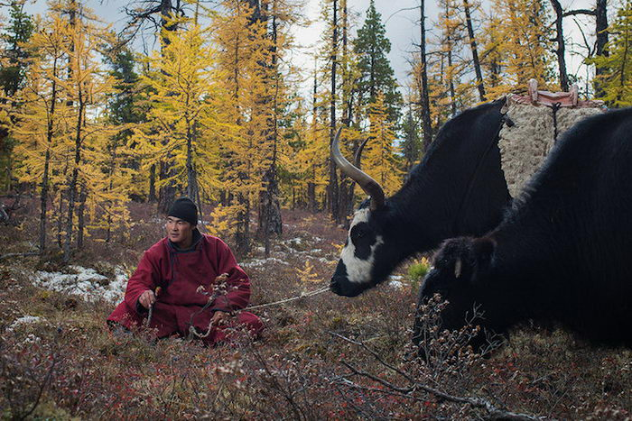 Кочевые племена Монголии в фотографиях Madoka Ikegami