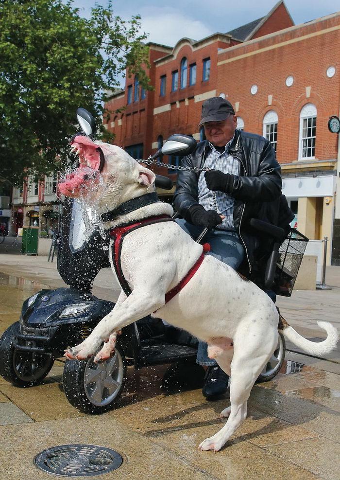 Удивительные собаки в фотографиях Chris Porsz