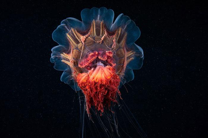 Морские создания в снимках Александра Семенова