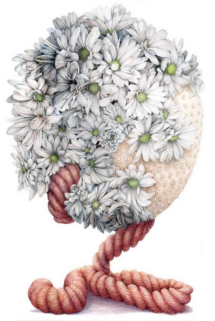 Иллюстрации Jillian Dickson