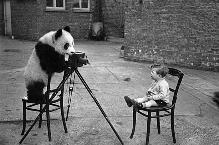 Звери, которые мечтают стать фотографами