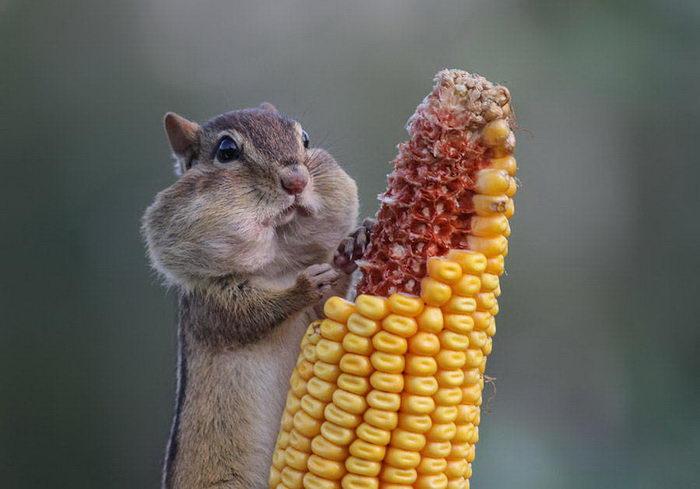 Смешные фото животных с конкурса Comedy Photography Awards