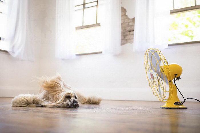 Собачки и фен: фотографии Illona Haus