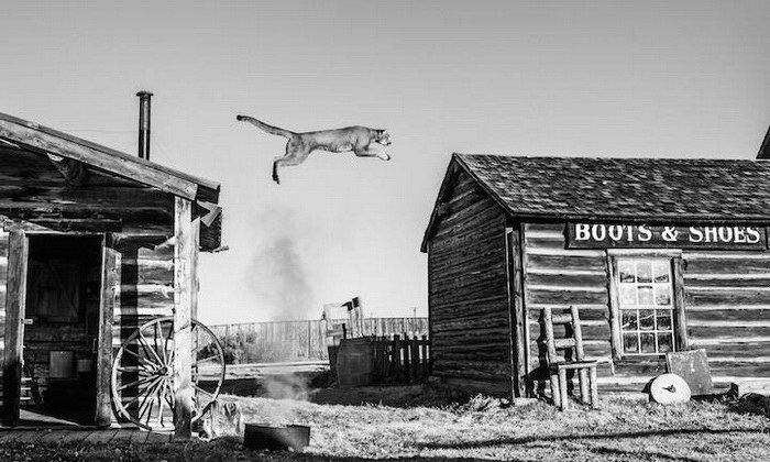 Черно-белые фотографии животных David Yarrow