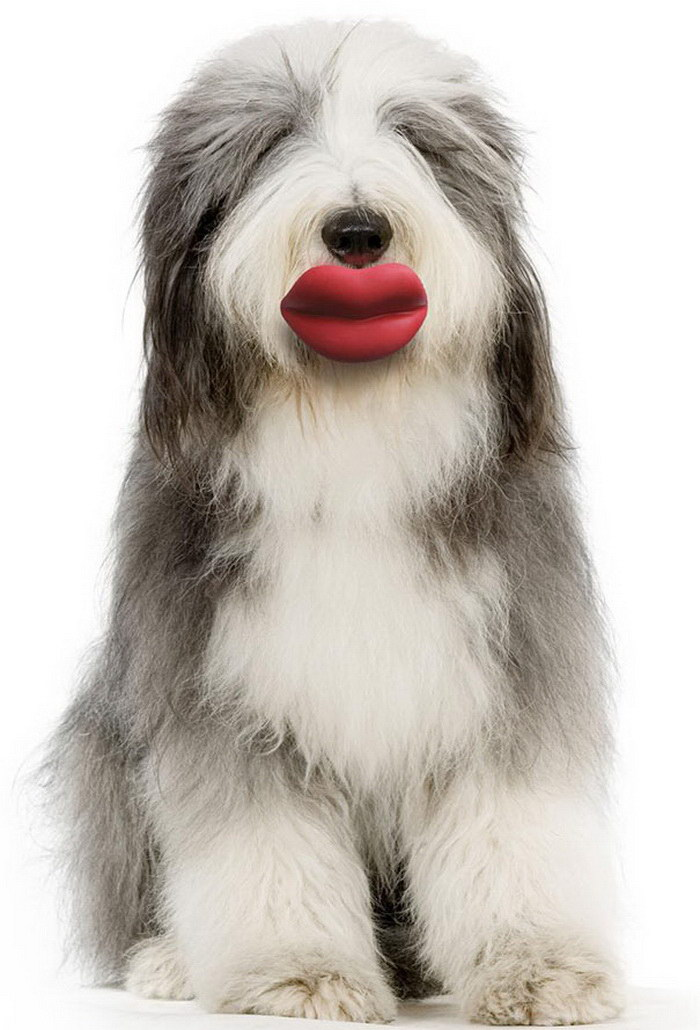 20 смешных собак, держащих в зубах любимые игрушки