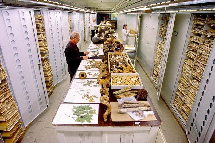 Сокровища Национального музея естественной истории США