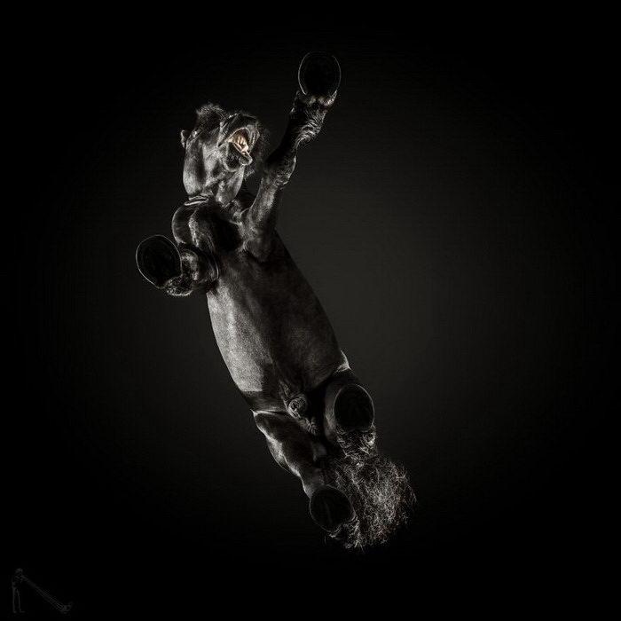 Фотографии лошадей снизу Andrius Burba