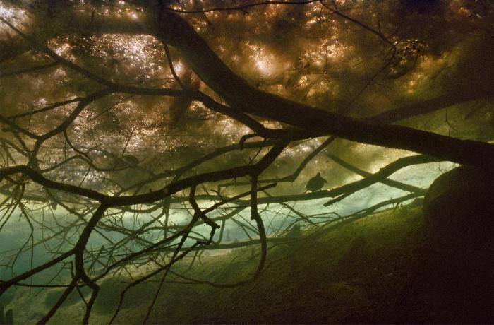 Подводные фотографии Karen Glaser