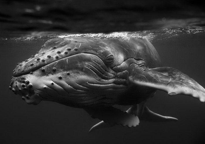 Гиганты Тихого океана: фото Jem Cresswell