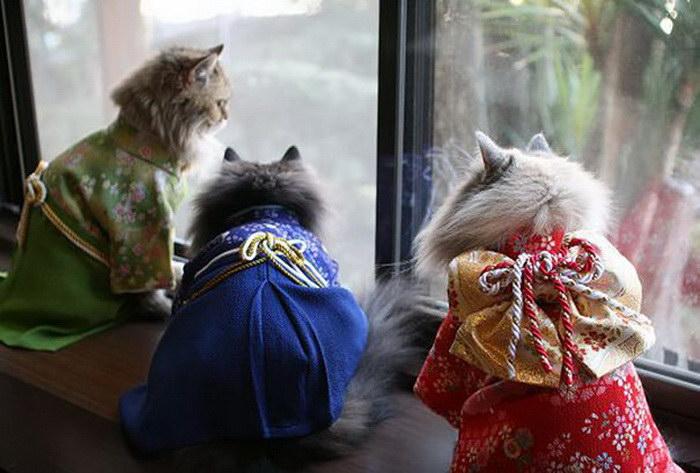Кошки в кимоно: японская мода 2015 года
