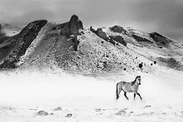 Лошади в фотографиях Troy Moth