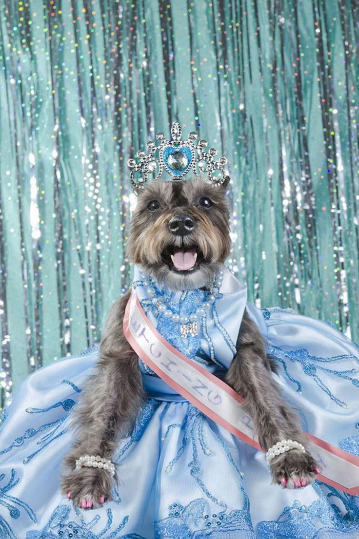 Участники конкурсов собачьей красоты