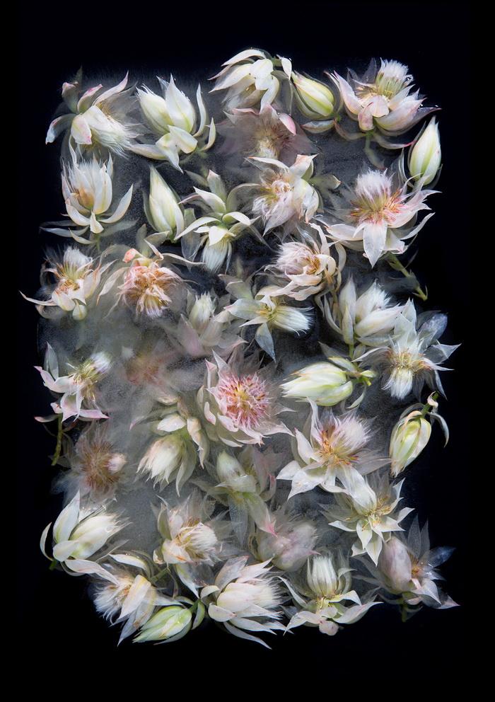 Замерзшие цветы в фотографиях Bruce Boyd и Tharien Smith