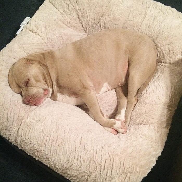 Собака по имени Нана и ее долгожданная счастливая жизнь