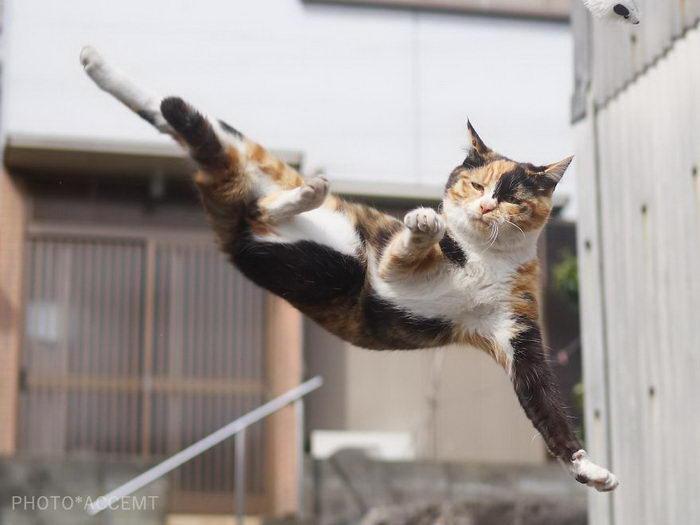 Ниндзя-кошки в фотографиях Hisakata Hiroyuki
