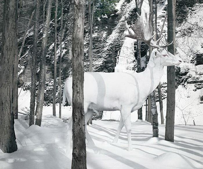 Фотокартины животных Simen Johan