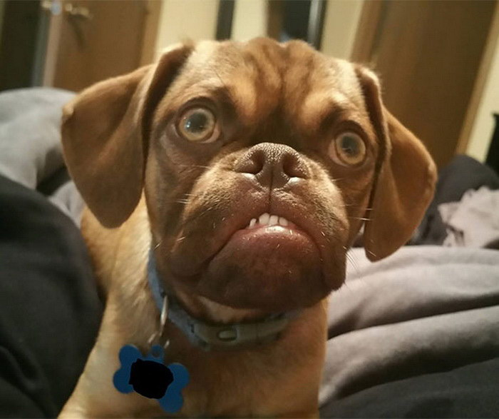 Сердитый пес: он даже круче, чем Grumpy Cat!